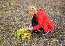 女孩收集黄色叶子花束  在下落的飞行的女孩谎言 秋天步行,在叶子的卷 下落的金发碧眼的女人 免版税库存照片