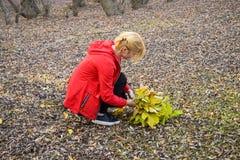 女孩收集黄色叶子花束  在下落的飞行的女孩谎言 秋天步行,在叶子的卷 下落的金发碧眼的女人 库存照片