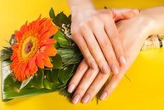 女孩有自然米黄钉子颜色的fingWoman手在与米黄自然钉子颜色的大丁草floweer在大大丁草桔子开花 免版税库存照片