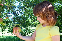 女孩果树园 库存照片