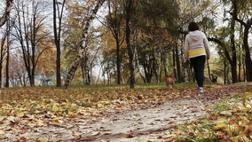 女孩步行与小猎犬小狗在秋季公园 影视素材