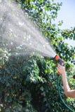 女孩浇灌的树在庭院里 免版税库存照片