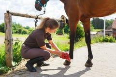 女孩清洗马 免版税库存图片