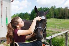 女孩清洗马 免版税库存照片