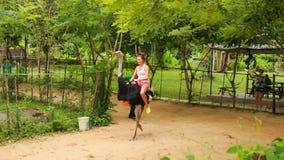 女孩游人在沿道路的驼鸟乘坐在旅游公园 股票录像