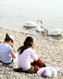 女孩湖天鹅注意 库存照片