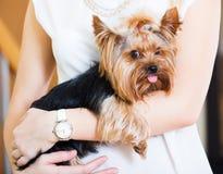 女孩爱抚的迷人的Yorkie狗 免版税库存照片