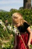 女孩玉簪属植物嗅到 库存照片