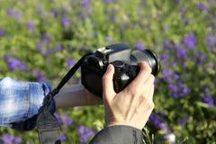 女孩的手拿着在领域的背景的照相机与紫色花的 库存图片