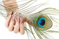 女孩的手有孔雀羽毛的 库存照片