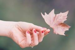 女孩的手,黄色叶子,秋天风景 库存图片