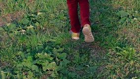 女孩的腿红色通过草跑的牛仔裤和运动鞋的 股票视频