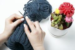 女孩编织有针的顶视图、特写镜头、白色背景和多汁植物一个帽子 免版税库存图片