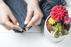 女孩编织有针的顶视图、特写镜头、白色背景和多汁植物一个帽子 免版税图库摄影