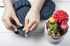 女孩编织有针的顶视图、特写镜头、白色背景和多汁植物一个帽子 免版税库存照片