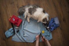 女孩缝合一只猫的衣裳从一件老衬衣 免版税库存照片
