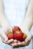女孩藏品极少数草莓 免版税图库摄影