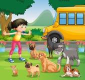 女孩训练狗在公园 免版税库存图片