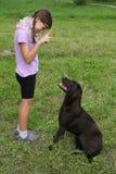 女孩训练在草甸的一条狗 库存照片