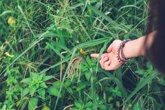 女孩设法` s的手接触Shorthorned蚂蚱Valanga nigricornis坐与黄色阳光的树在都市公园 免版税库存照片