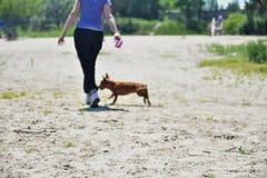 女孩走与一条狗在森林,在焦点外面 库存图片