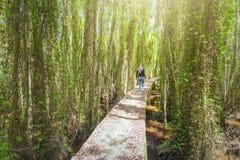 女孩走的小路通过melaleuca森林 免版税库存图片