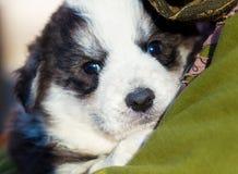 女孩运载在她的胳膊的一条小狗 免版税库存照片