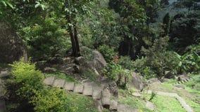 女孩通过热带公园走并且为自然股票英尺长度录影照相秀丽  影视素材