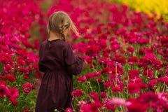 女孩通过红色毛茛花的领域走,到达她的棕榈接触花 图库摄影