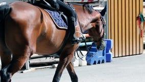 女孩骑乘马和学会与男性教练员 股票视频