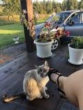女孩,在工作在她的房子附近坐下了并且敬佩庭院以后,她的猫摩擦反对她的腿并且微笑问注意和 免版税库存图片