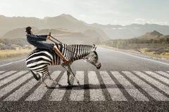 女实业家乘驾斑马 混合画法 免版税库存照片