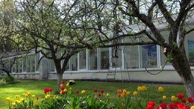 女工洗涤的温室在美丽的庭院里 股票录像
