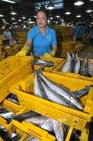 女工计数她的渔场在Binh Dien批发夜海鲜市场,最大一个在胡志明市, vi上 免版税库存照片