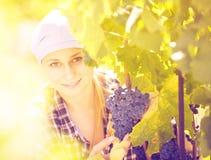 年轻女工画象葡萄农场的 免版税库存照片