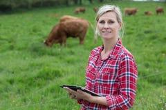 女性与片剂的农夫处理的母牛 库存照片