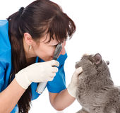 女性专业狩医医生审查的宠物猫眼 查出 免版税库存照片