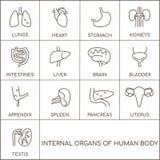 女性人体器官男性和 向量例证