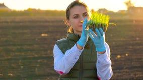 女性农夫在种植它前审查幼木样品在土壤 影视素材
