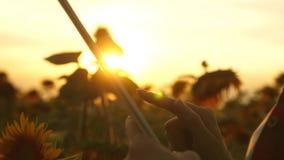 女性农艺师学习开花向日葵 计划他们的收入的领域的女实业家 农夫女孩 股票视频