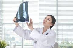 女性医生是被审查的X光片 库存图片