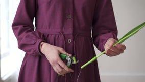 女性卖花人的手修剪与薄纱茎 股票录像