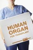 女性外科医生运载的移植器官箱子 免版税库存照片