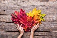 女性手举行心脏红色黄色叶子落 免版税库存照片