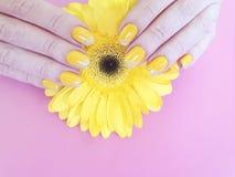 女性手修剪在上色的大丁草时髦的纤巧夏天设计高雅花 库存照片