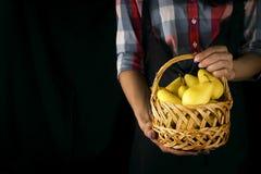 女性手拿着一个篮子用梨 免版税库存照片