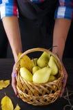 女性手拿着一个篮子用梨 免版税图库摄影