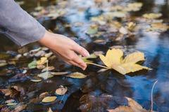女性手接触在水坑的一片下落的叶子 免版税库存照片