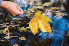女性手接触在水坑的一片下落的叶子 库存图片