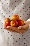 女性手烹调拿着鲜美新鲜水果杏子 特写镜头 免版税库存照片